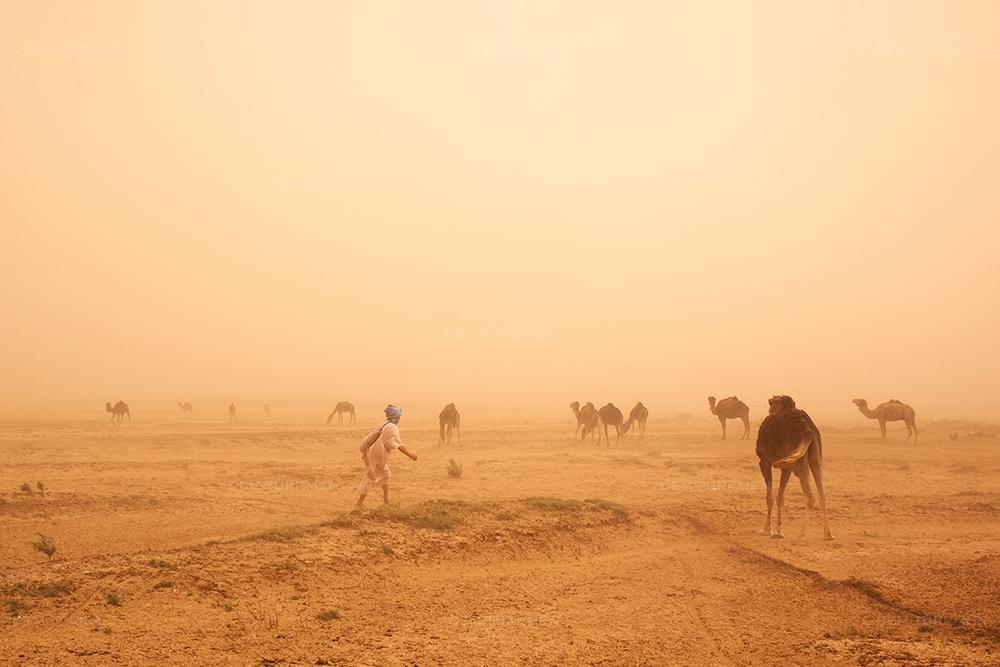 morocco-sahara desert-camels-storm